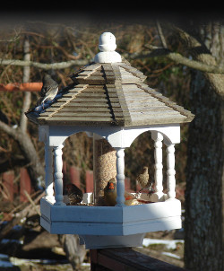 Birds on top of the Gazebo bird feeder