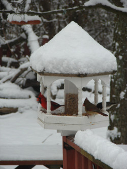 snow covered gazebo bird feeder